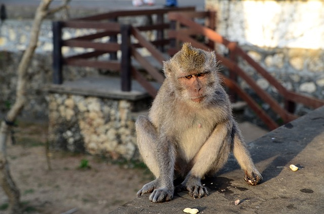 animaux indonesie