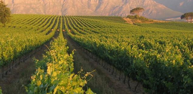Faire la route des vins à Bordeaux