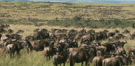 Passez une surprenante semaine découverte au Kenya : nos incontournables